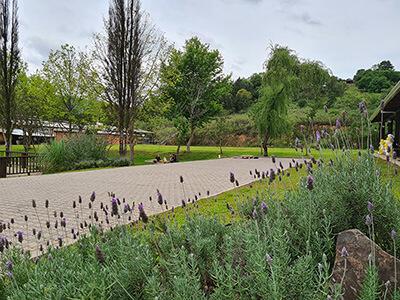 Pátio da Celebrar eventos com calçada e gramado e flores de alfazema em primeiro planoJardim da